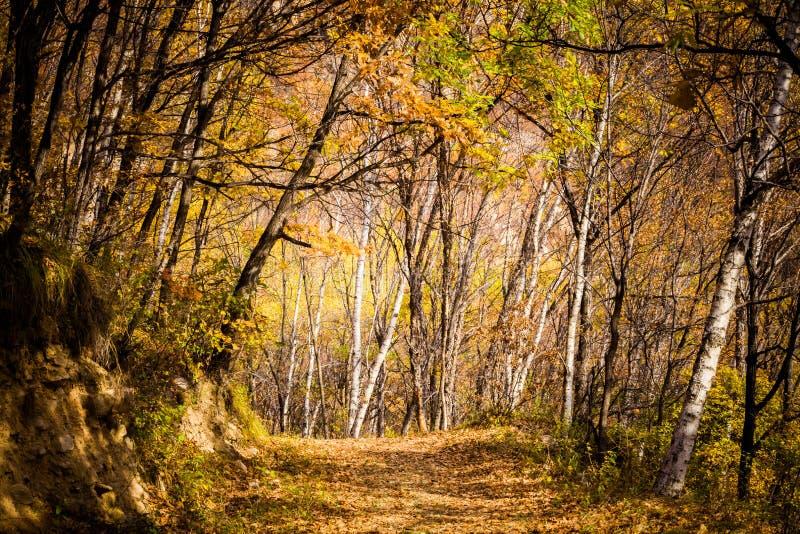 Autumn Pathway arkivbild
