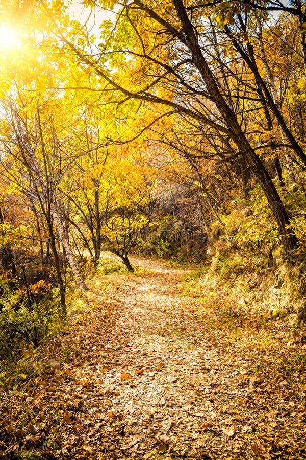 Autumn Pathway royaltyfria foton