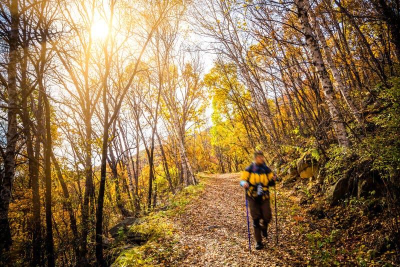 Autumn Pathway royaltyfri fotografi