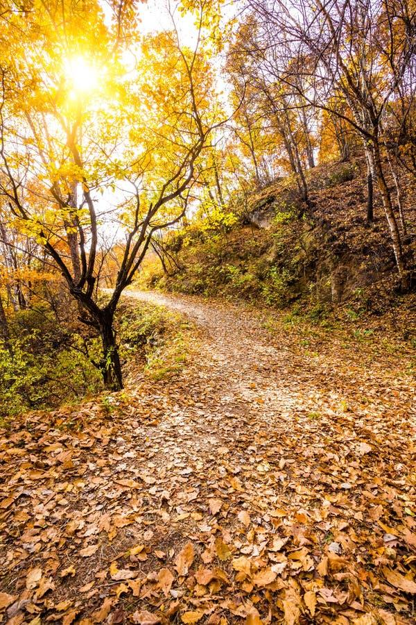 Autumn Pathway arkivfoton