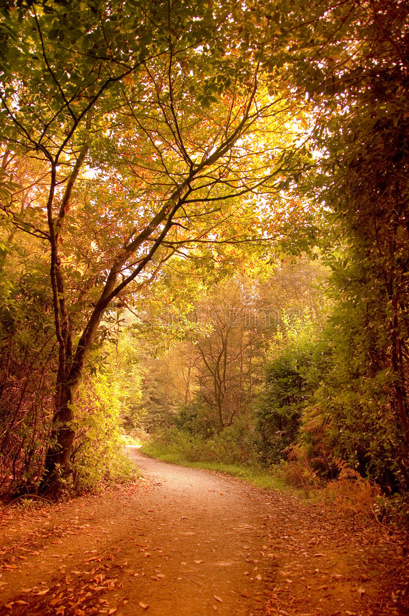 Download Autumn Pathway stock image. Image of brown, fantasy, october - 6552151