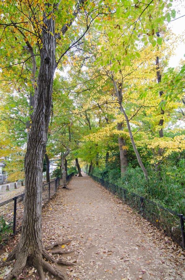 Autumn Pathway in het bos royalty-vrije stock fotografie