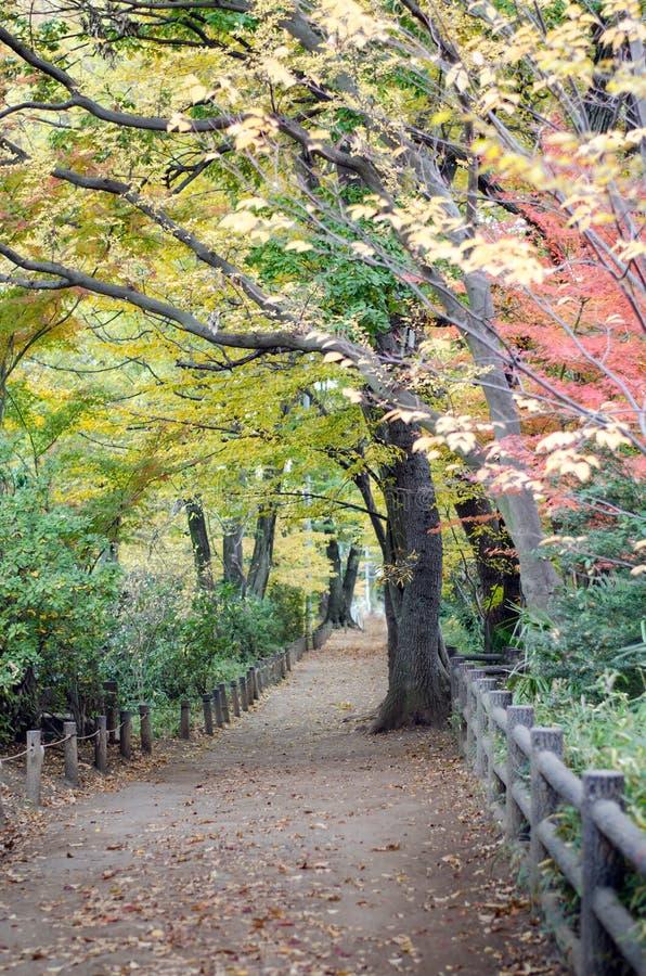 Autumn Pathway i skogen till Musashino Art University arkivbilder