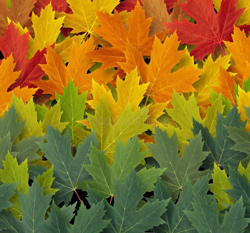 Autumn Pattern ilustración del vector