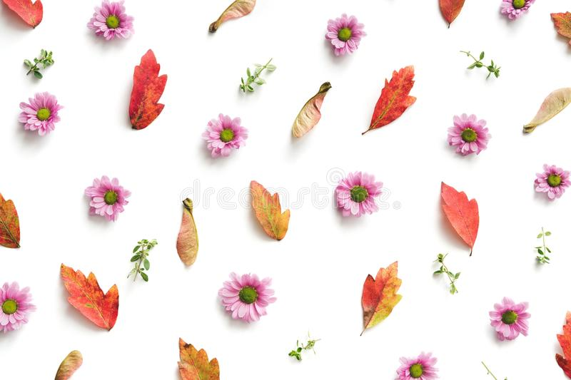 Autumn Pattern With Colorful Leaves et Daisy Flowers On Wh rose photos stock