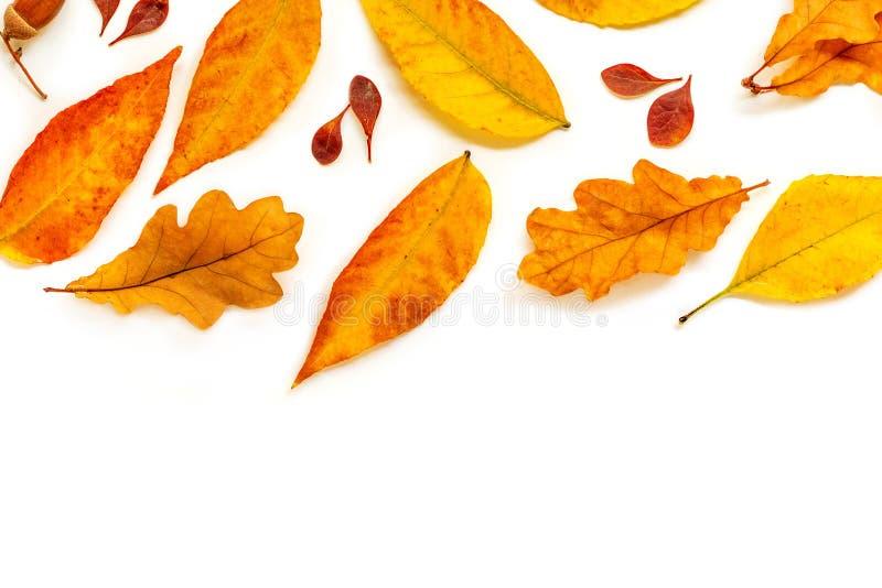 Autumn Pattern Dalingssamenstelling met gouden marple en eiken die bladeren op witte achtergrond wordt geïsoleerd Vlak leg, hoogs stock fotografie