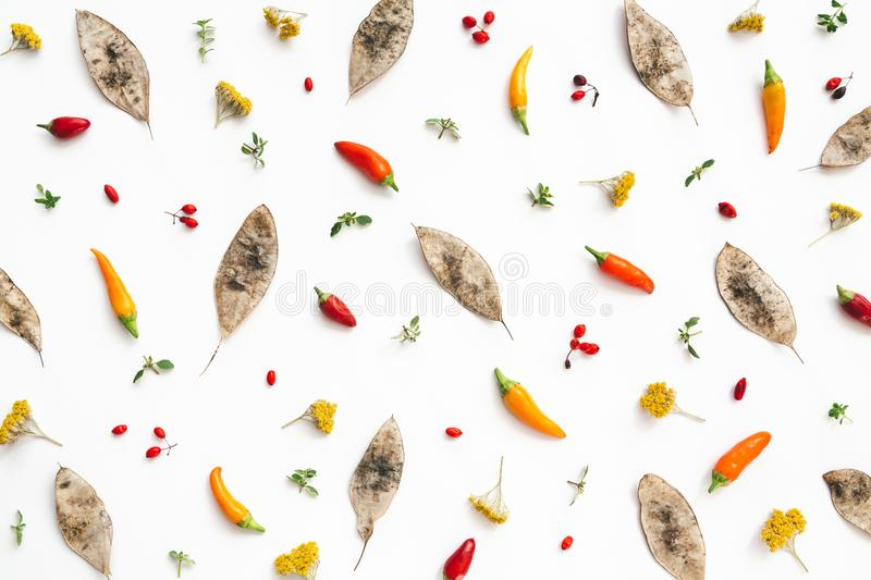 Autumn Pattern With Dry Seeds, bacche rosse e Chili Pe variopinto fotografie stock