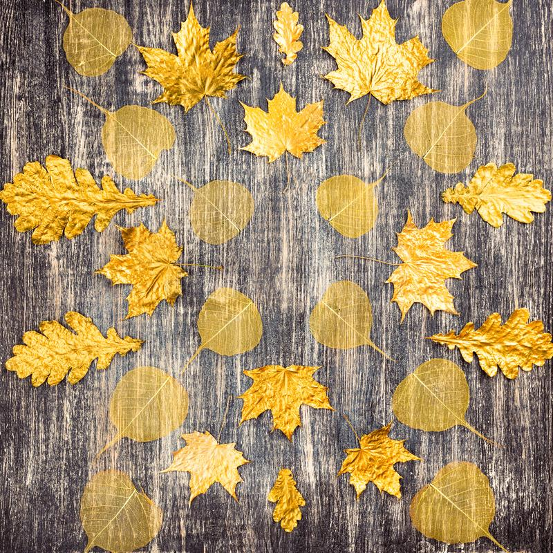 Autumn pattern golden maple leaves on wooden background. royalty free stock photo