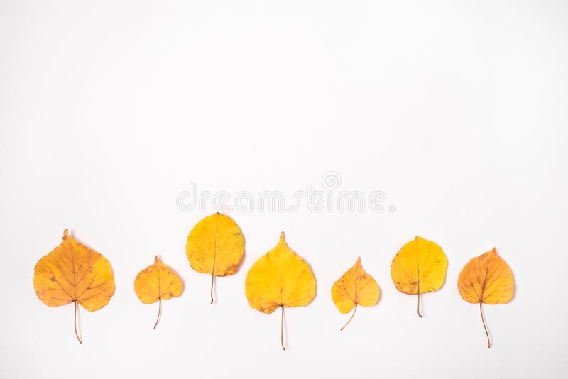 Autumn pattern made of yellow leaves on white background. stock photo