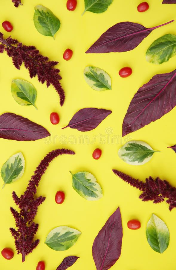 Autumn pattern of maroon or burgundy and green-yellow leaves and red dogwood berries on a yellow background. Thanksgiving. Pattern royalty free stock image