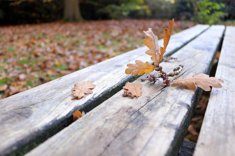 Autumn picnic table. An oak twig fallen onto a picnic table in autumn stock photography