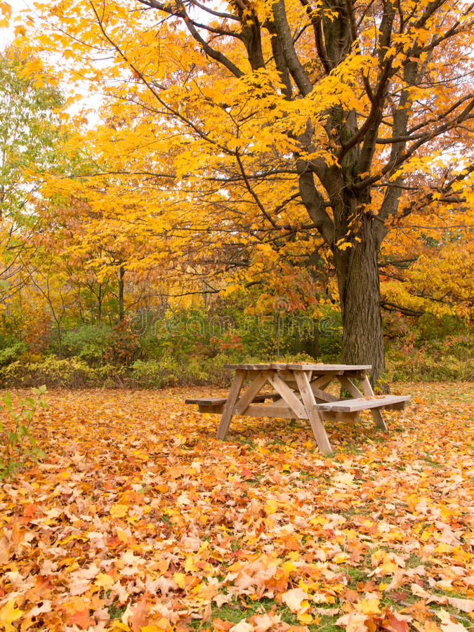 Autumn Picnic Table In The Park Royalty Free Stock Image