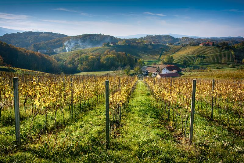 Autumn picturesque landscape of vineyard valley in Europe royalty free stock photos
