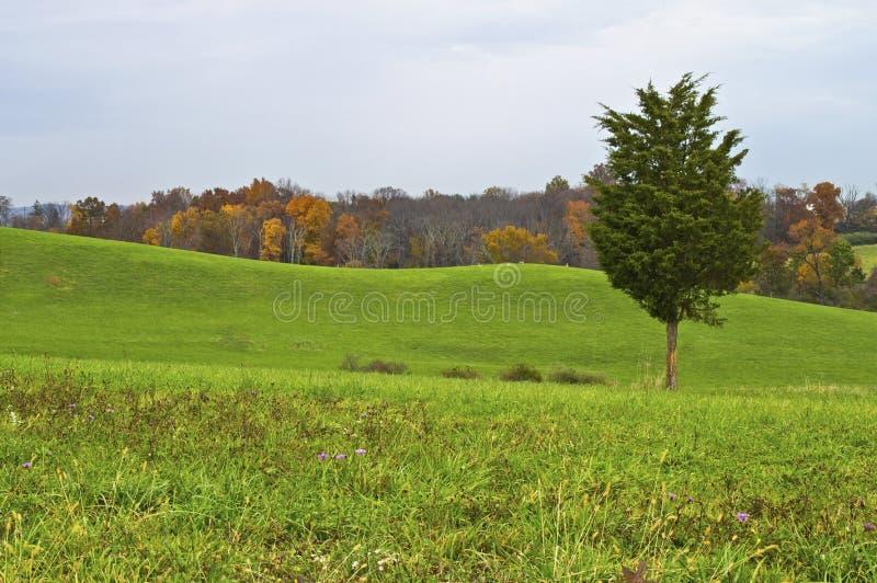 Autumn Pine stockfotografie