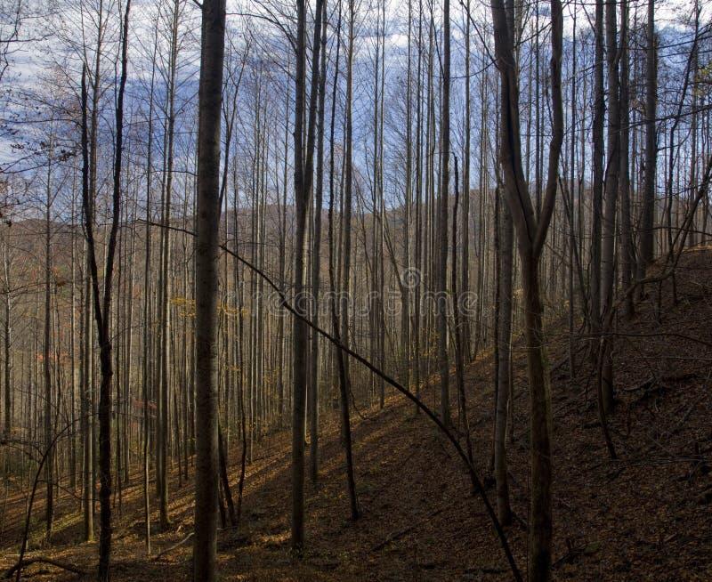 Autumn, Pisgah NF. Autumn, Pisgah National Forest, NC stock photo