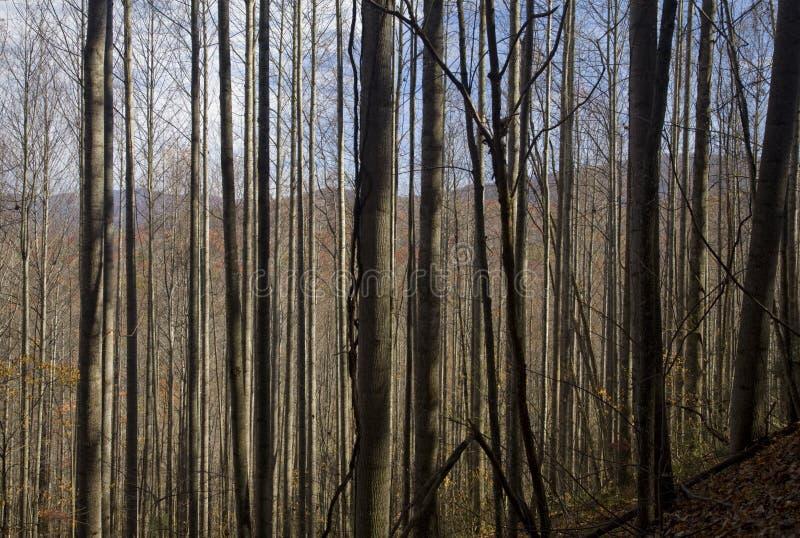Autumn, Pisgah NF. Autumn, Pisgah National Forest, NC royalty free stock photo