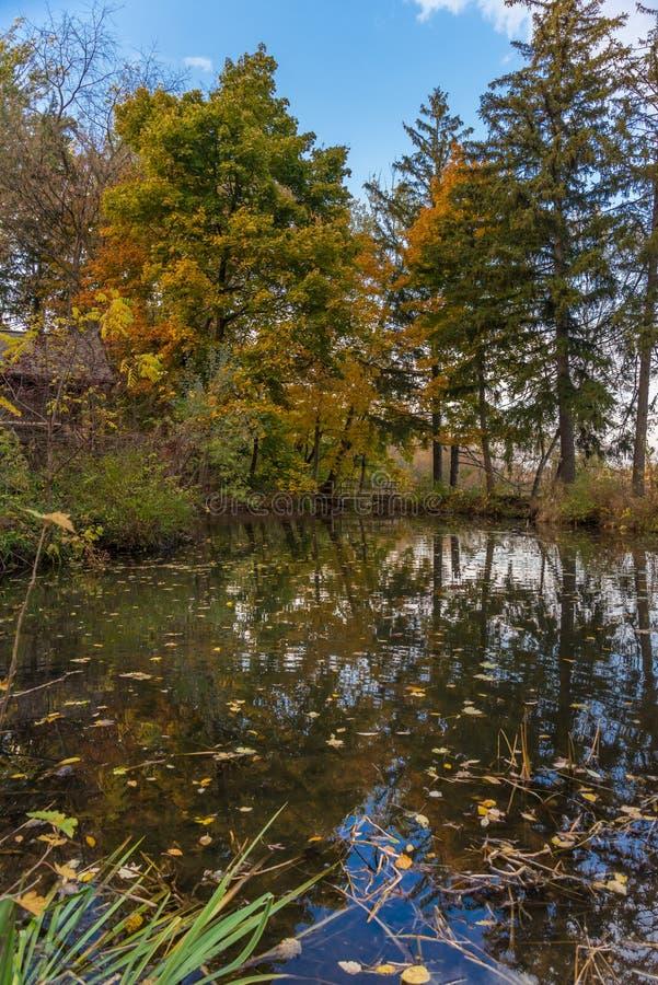 Autumn pond in park stock image