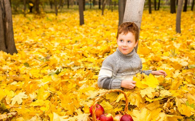 Autumn portrait of beautiful child. Happy little boy with leaves in the park in fall. stock image