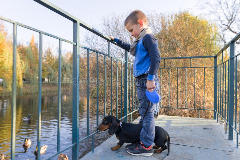 Autumn portrait of boy child with dachshund dog on bridge in sunny park stock images