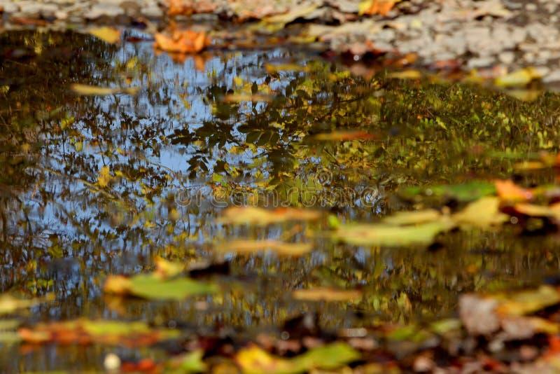 Autumn puddle with reflection of surrounding foliage stock image