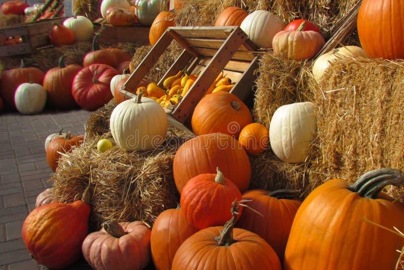 Autumn Pumpkin Display stock afbeeldingen