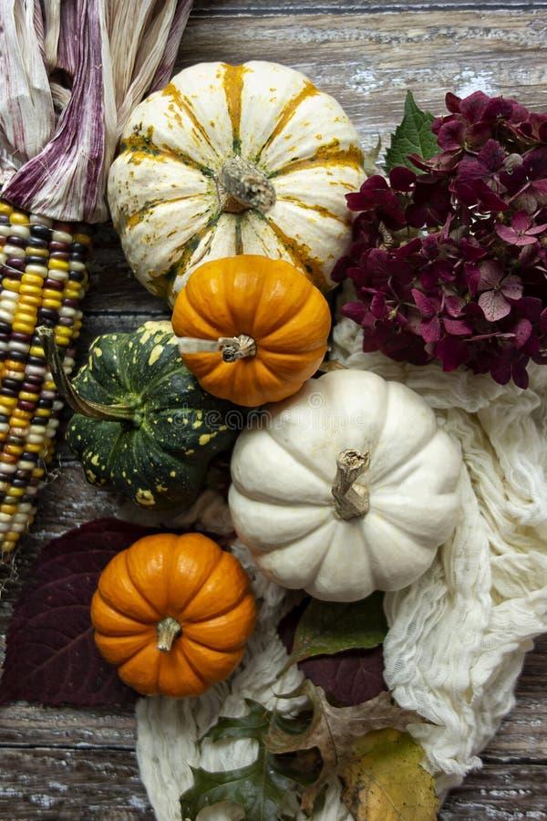 Autumn Pumpkin Flatlay fotografia stock libera da diritti