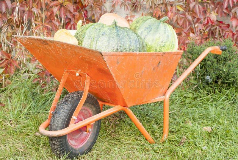 Autumn Pumpkin Harvest fotografie stock libere da diritti