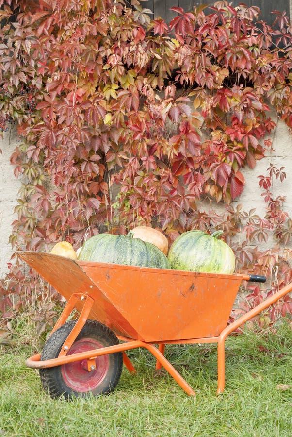 Autumn Pumpkin Harvest royalty free stock image