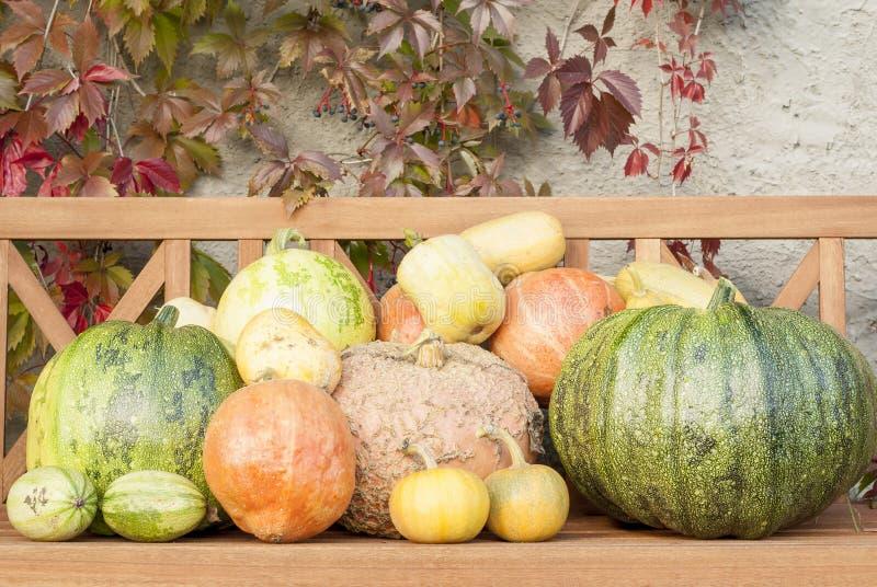 Autumn Pumpkin Harvest stock image