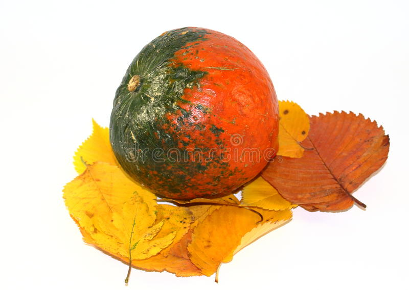 Autumn pumpkin stock photo