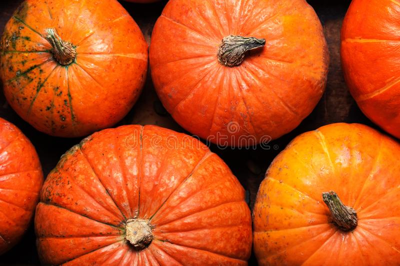 Autumn Pumpkin Stalks Background - orange pumpkins for Thanksgi. Ving, top view royalty free stock photography