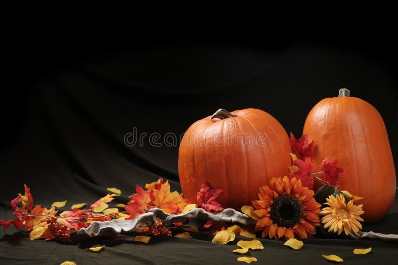 Download Autumn pumpkin still life stock image. Image of october - 23873595