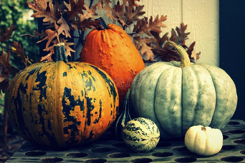 Autumn Pumpkin Still Life. Still life of autumn pumpkins and gourds with oak leaves in the background, for fall and autumn seasons stock photo