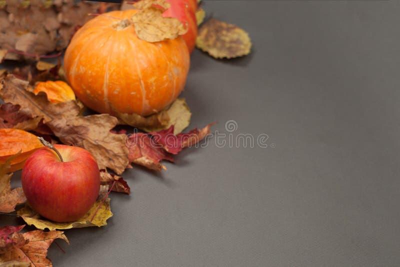Autumn Pumpkin Thanksgiving Background - abóbora alaranjada e maçãs vermelhas sobre as folhas da queda na tabela cinzenta Copie o fotografia de stock royalty free
