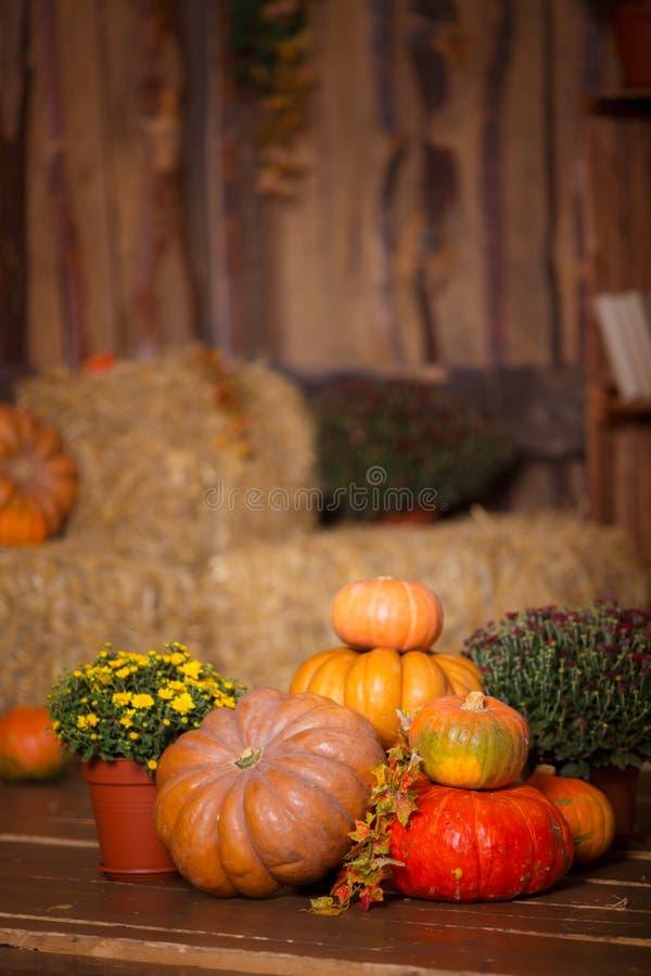 Autumn Pumpkin Thanksgiving Background - abóboras, folhas e flores alaranjadas sobre o assoalho de madeira imagem de stock royalty free