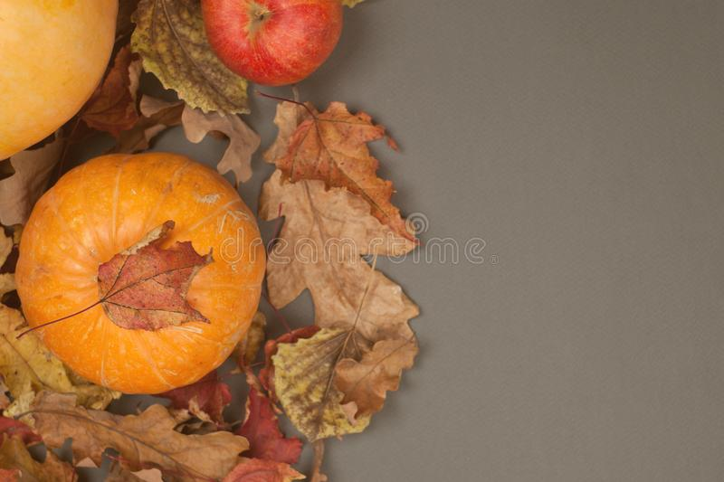 Autumn Pumpkin Thanksgiving Background - orange pumpkin and red apples over fall leaves on gray table. copy space. royalty free stock photos