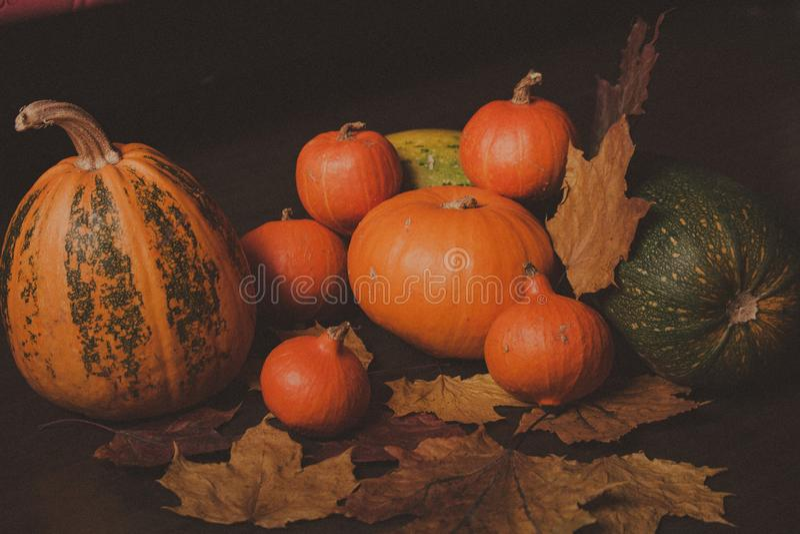 Autumn Pumpkin Thanksgiving Background - oranje pompoenen stock fotografie