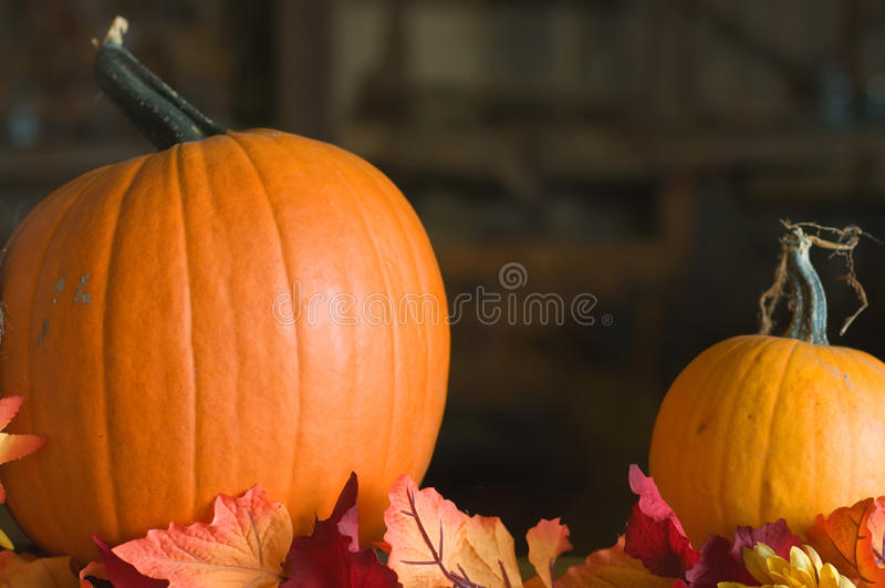 Autumn pumpkins. A decorative display of pumpkins and autumn leaves stock image