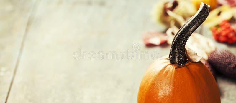 Autumn Pumpkins royalty-vrije stock foto's