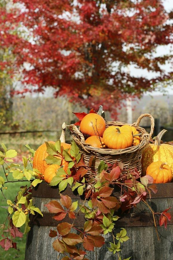 Autumn pumpkins and gourds barrel stock photos