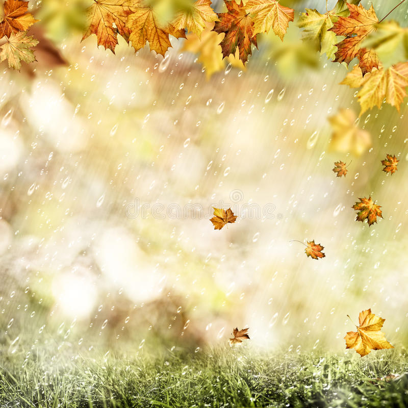 Autumn Rain photos libres de droits