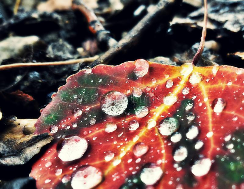 Autumn Rain. Rain droplets gather on autumn stricken leaf while tree reflections fill the raindrops stock photography