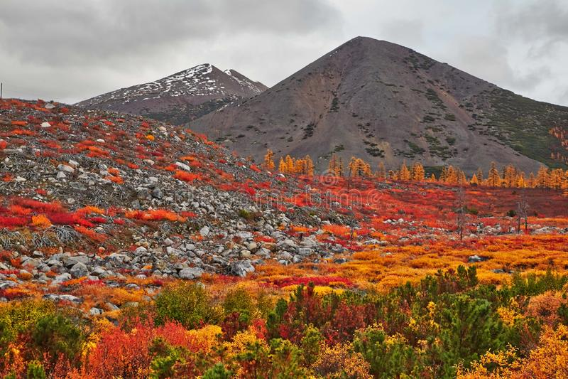 Download Autumn. After A Rain. Jack London's Lake Stock Image - Image: 62312807