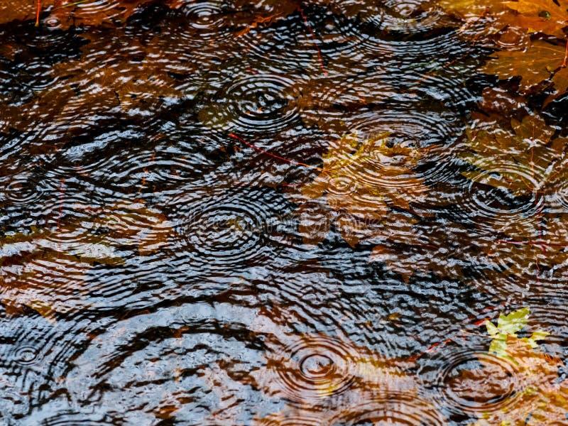 Autumn Rain Puddle Royalty Free Stock Image