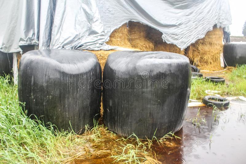 Autumn rainy day. Two round silage bales wrapped in a black membrane. royalty free stock photo