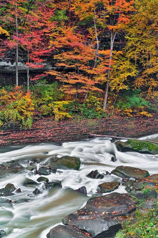 Autumn Rapids foto de stock