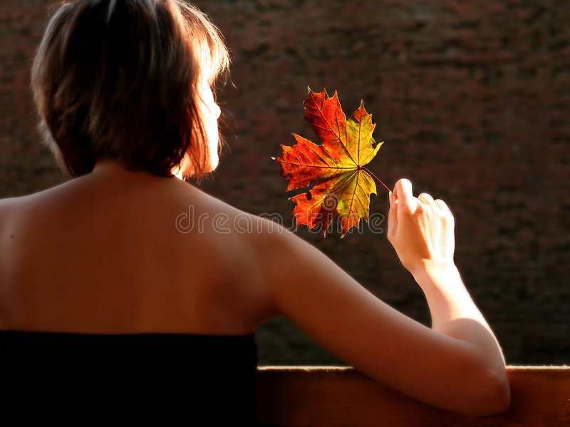 AUTUMN RED. Bright autumn red leaves stock images