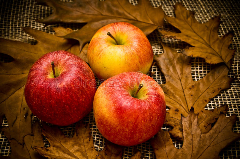 Autumn red apples stock image