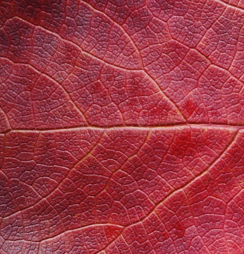 Free Autumn Red Leaf Stock Photo - 47585460