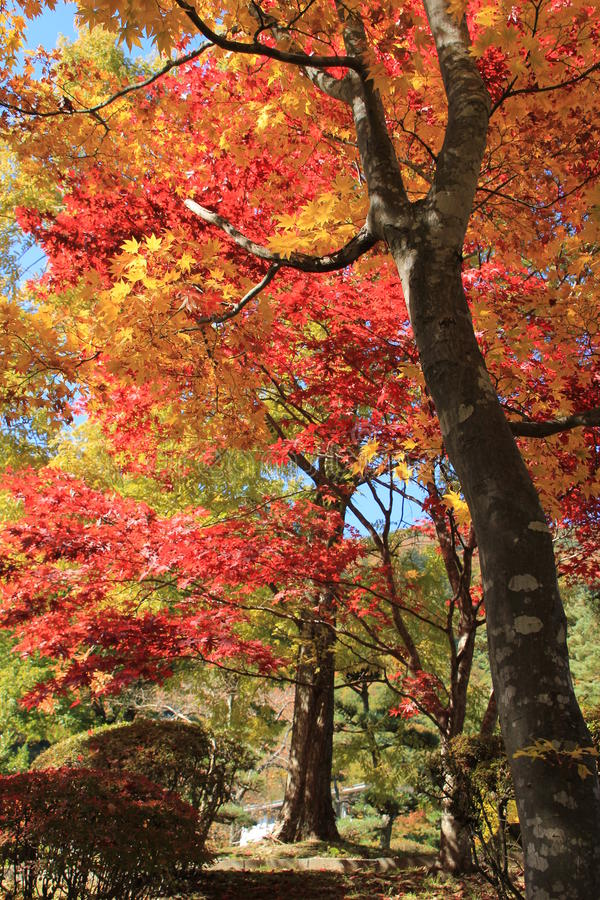 Free Autumn Red Leaves Royalty Free Stock Image - 16937026